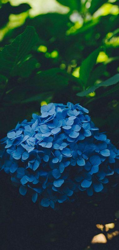 Blue Leaf Flower 1080x2270 380x799