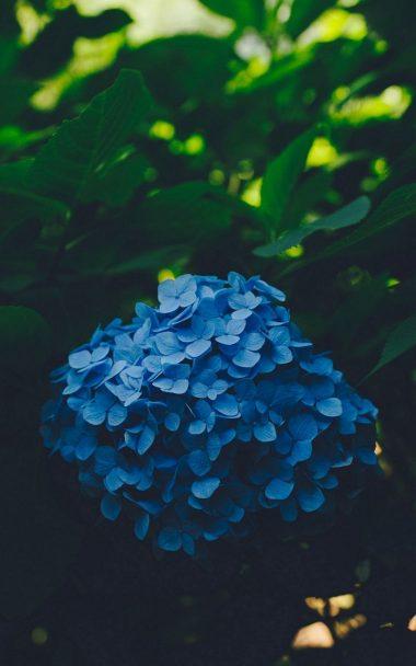 Blue Leaf Flower 800x1280 380x608