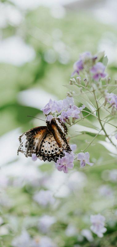 Butterfly Flower Closeup 1080x2270 380x799