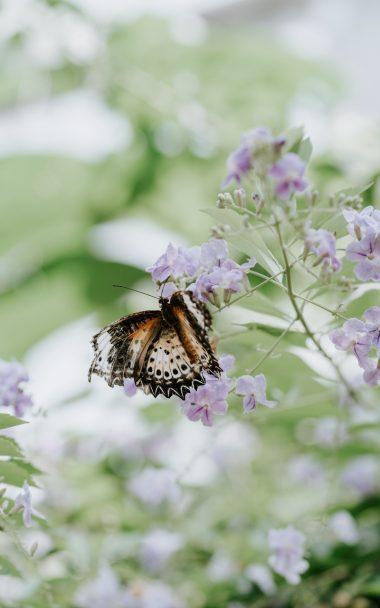 Butterfly Flower Closeup 800x1280 380x608