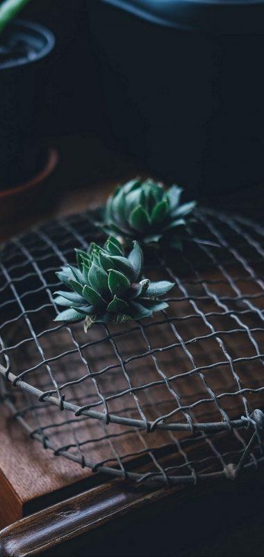 Cactus Houseplant Table 1080x2270 380x799