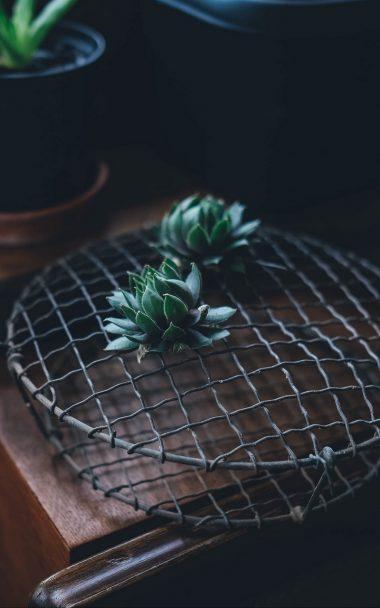 Cactus Houseplant Table 800x1280 380x608