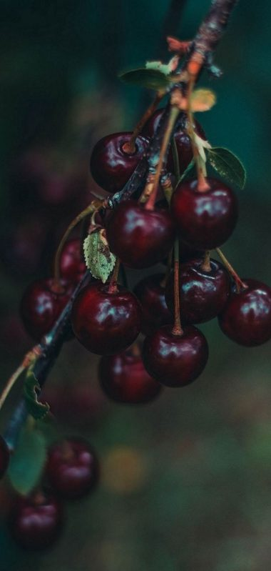 Cherries Berries Branch 1080x2270 380x799