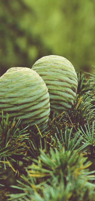 Cones Tree Needles 1080x2270 380x799