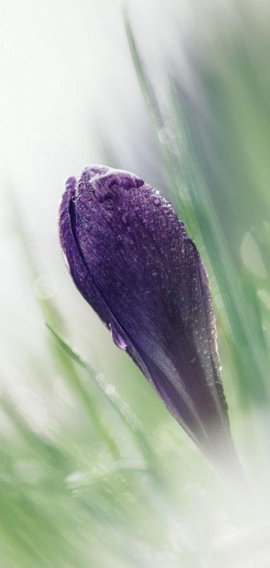 Crocus Macro Snowdrop Blurring 1080x2270 380x799