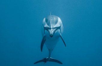 Dolphin Underwater World Swim 1080x2270 340x220