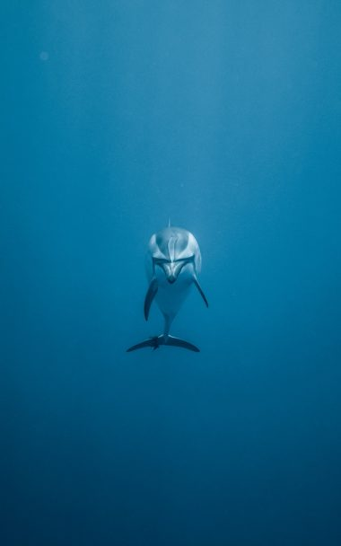 Dolphin Underwater World Swim 800x1280 380x608