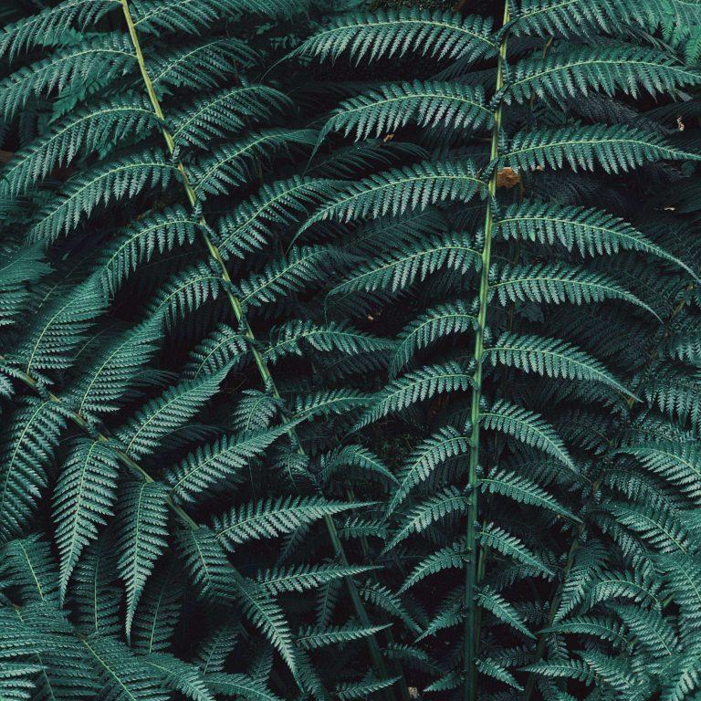 Fern Plant Leaves 2780x2780 768x768