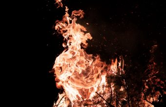 Fire Flame Branches 800x1280 340x220