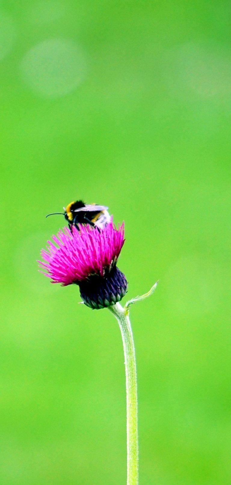 Flower Bee Macro Bud 1080x2270 768x1614