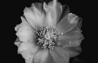 Flower Bw Bud 1080x2270 340x220