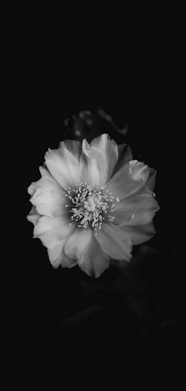 Flower Bw Bud 1080x2270 380x799