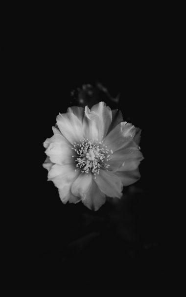 Flower Bw Bud 800x1280 380x608
