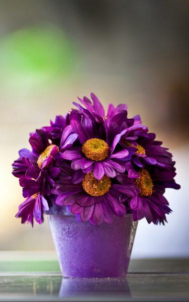 Flower Pot Purple Petals 800x1280 380x608