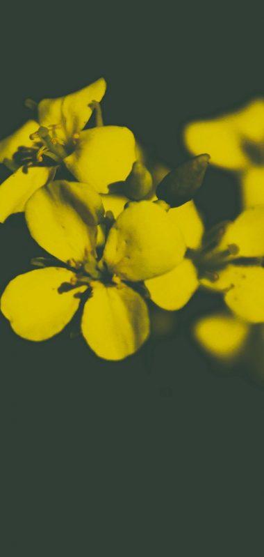 Flower Yellow Petals 1080x2270 380x799