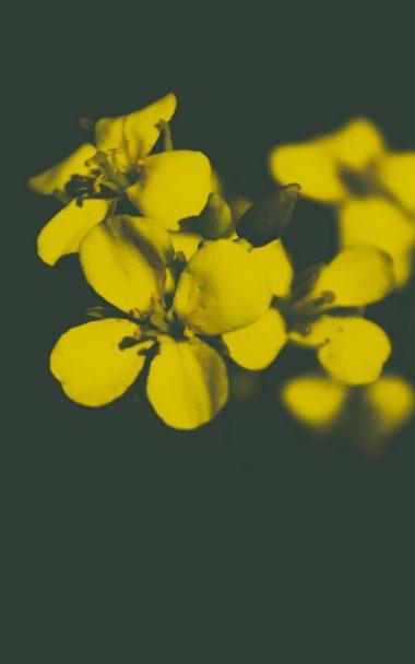 Flower Yellow Petals 800x1280 380x608