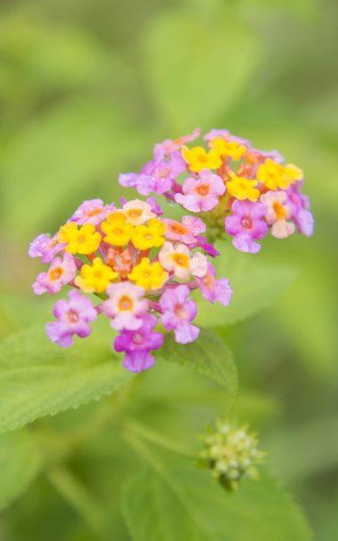 Flowers Close Up Blurred Green 800x1280 380x608