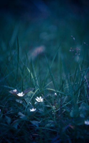 Flowers Grass Field Flower 800x1280 380x608