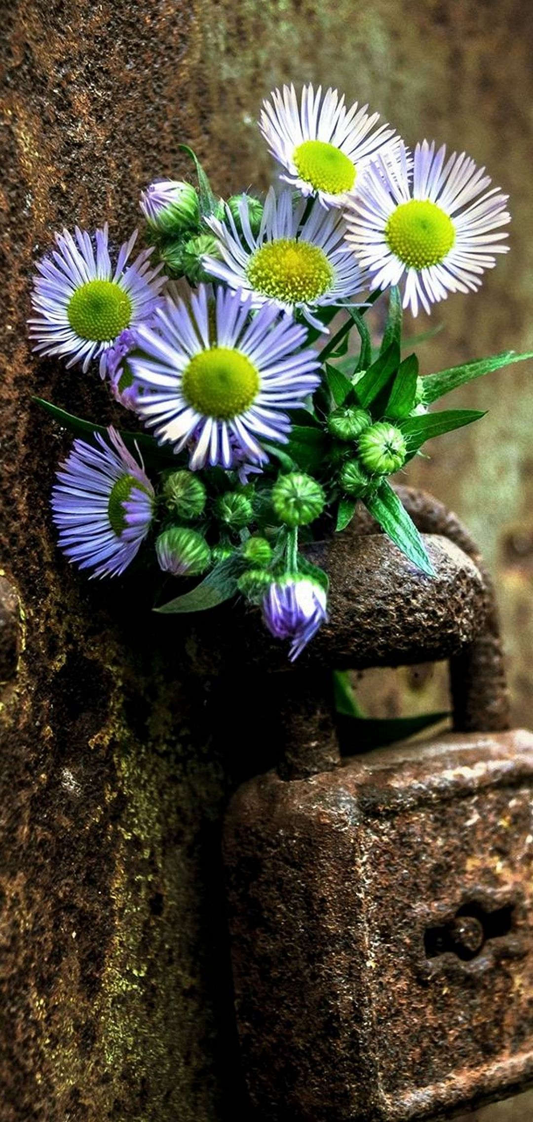 Flowers Lock Rust