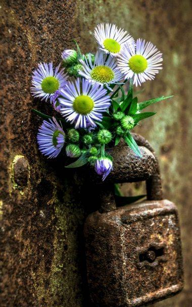 Flowers Lock Rust 800x1280 380x608