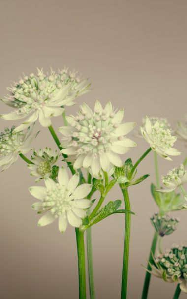 Flowers Plant Stems 800x1280 380x608