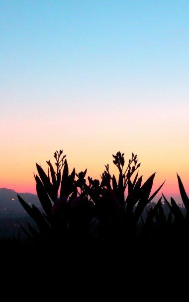 Flowers Shadow Plant Sunset 115117 800x1280 800x1280 380x608