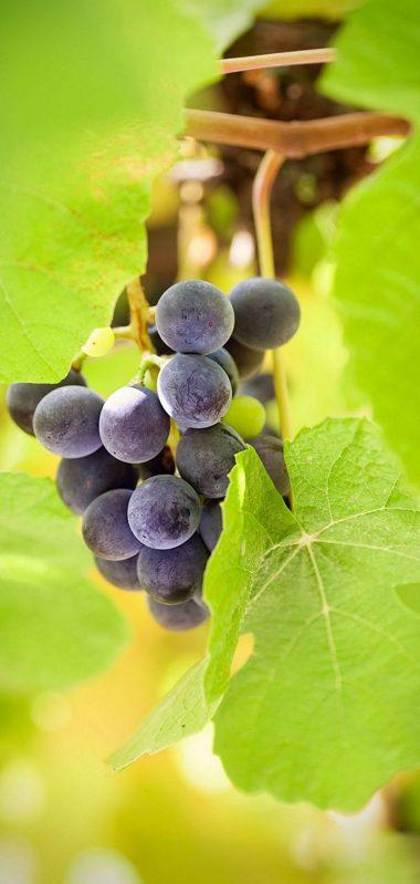 Food Leaves Green Berries 1080x2270 380x799