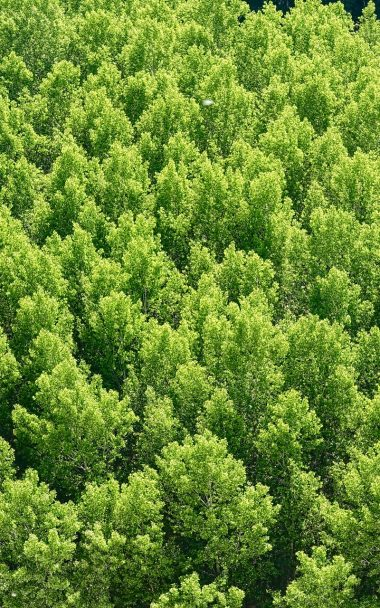Forest Trees View From Above 800x1280 380x608