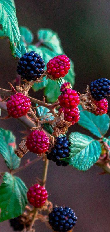 Fruits Raspberry Blackberry 1080x2270 380x799