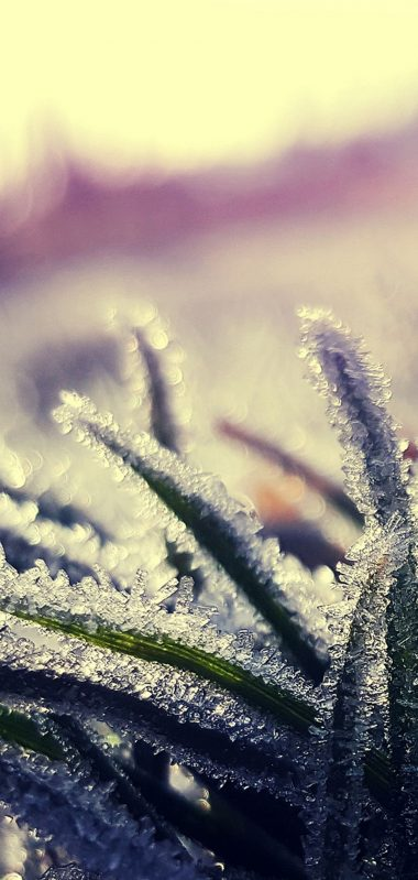 Grass Frost Ice Close Up 1080x2270 380x799