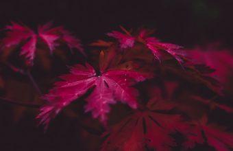 Leaves Wood Black 800x1280 340x220