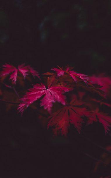 Leaves Wood Black 800x1280 380x608