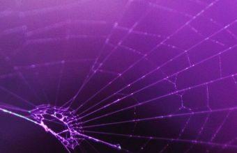 Macro Spider Purple 800x1280 340x220