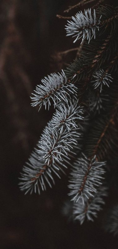 Macro Spruce Branches 1080x2270 380x799