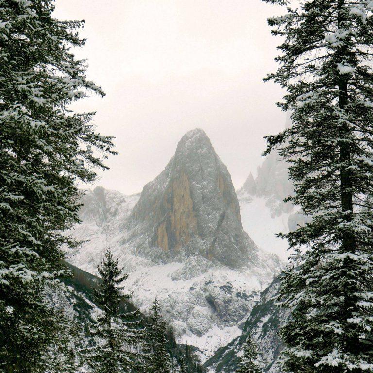 Mountain Snow Branches 2780x2780 768x768