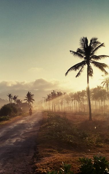 Palm Road Sunset 800x1280 380x608