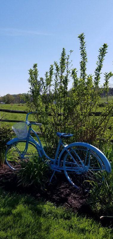 Pasture Nature Meadow Grass Bike 1080x2270 380x799