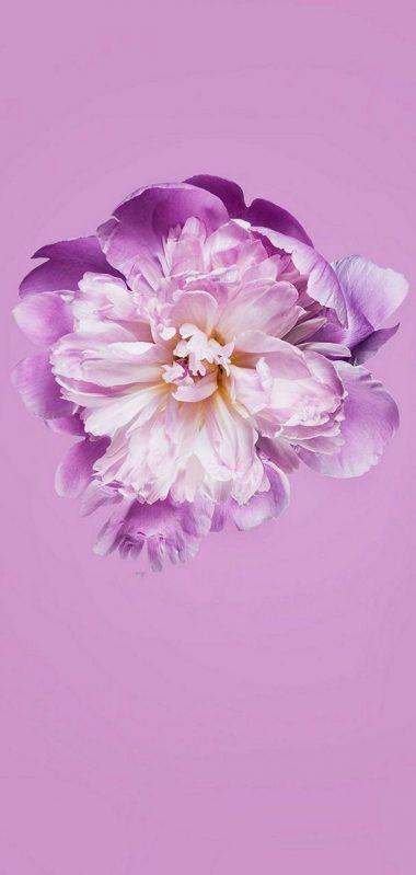 Pink Petals Flower 1080x2270 380x799