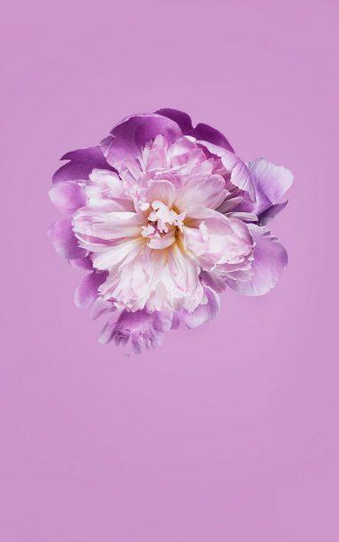 Pink Petals Flower 800x1280 380x608