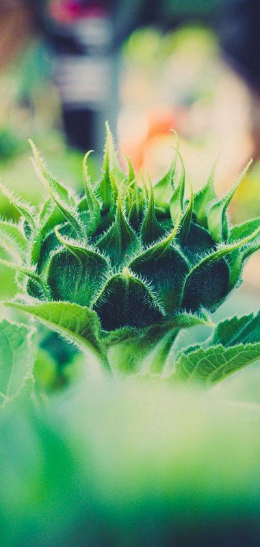 Plant Close Up Blurred 1080x2270 380x799