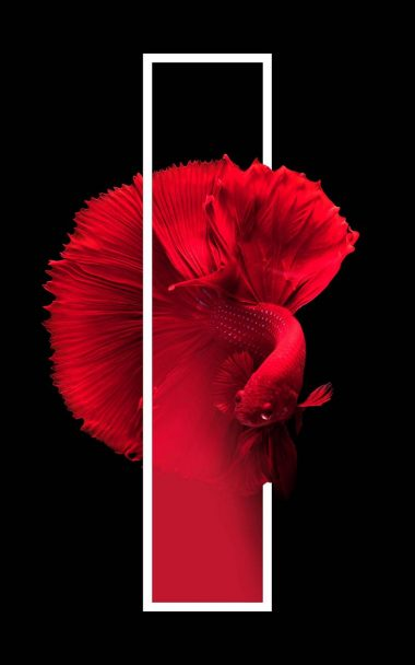Red Fish Black Background Minimal 800x1280 380x608