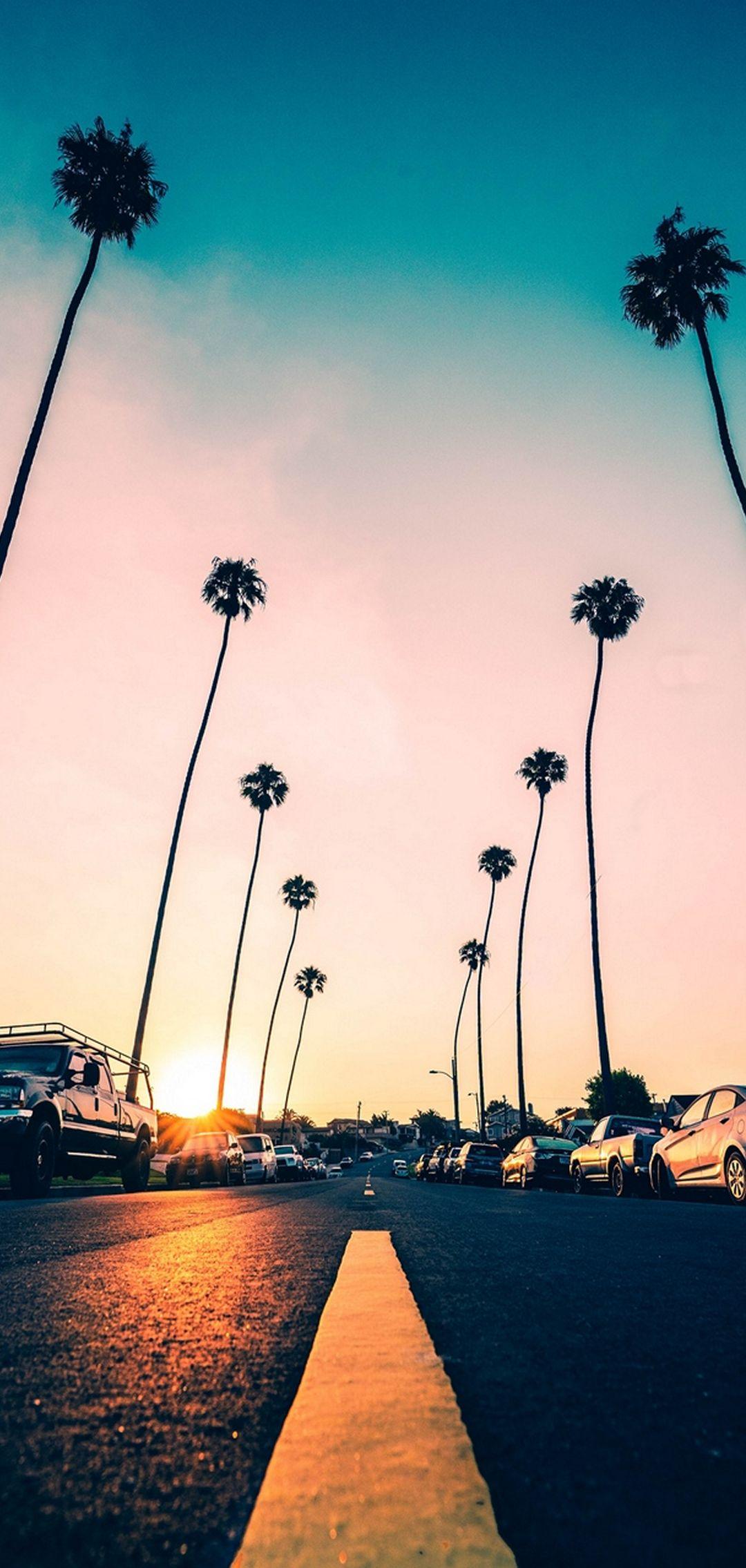 Road Palm Trees Asphalt