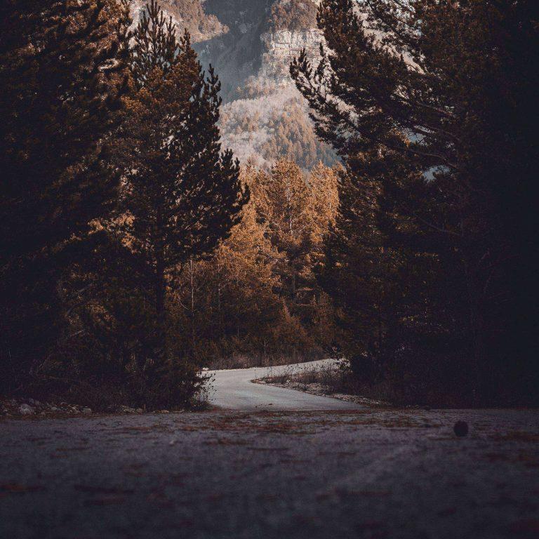 Road Trees Turn 2780x2780 768x768