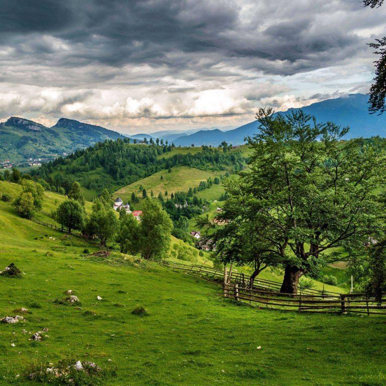 Romania Field Grass Meadow 2780x2780 768x768