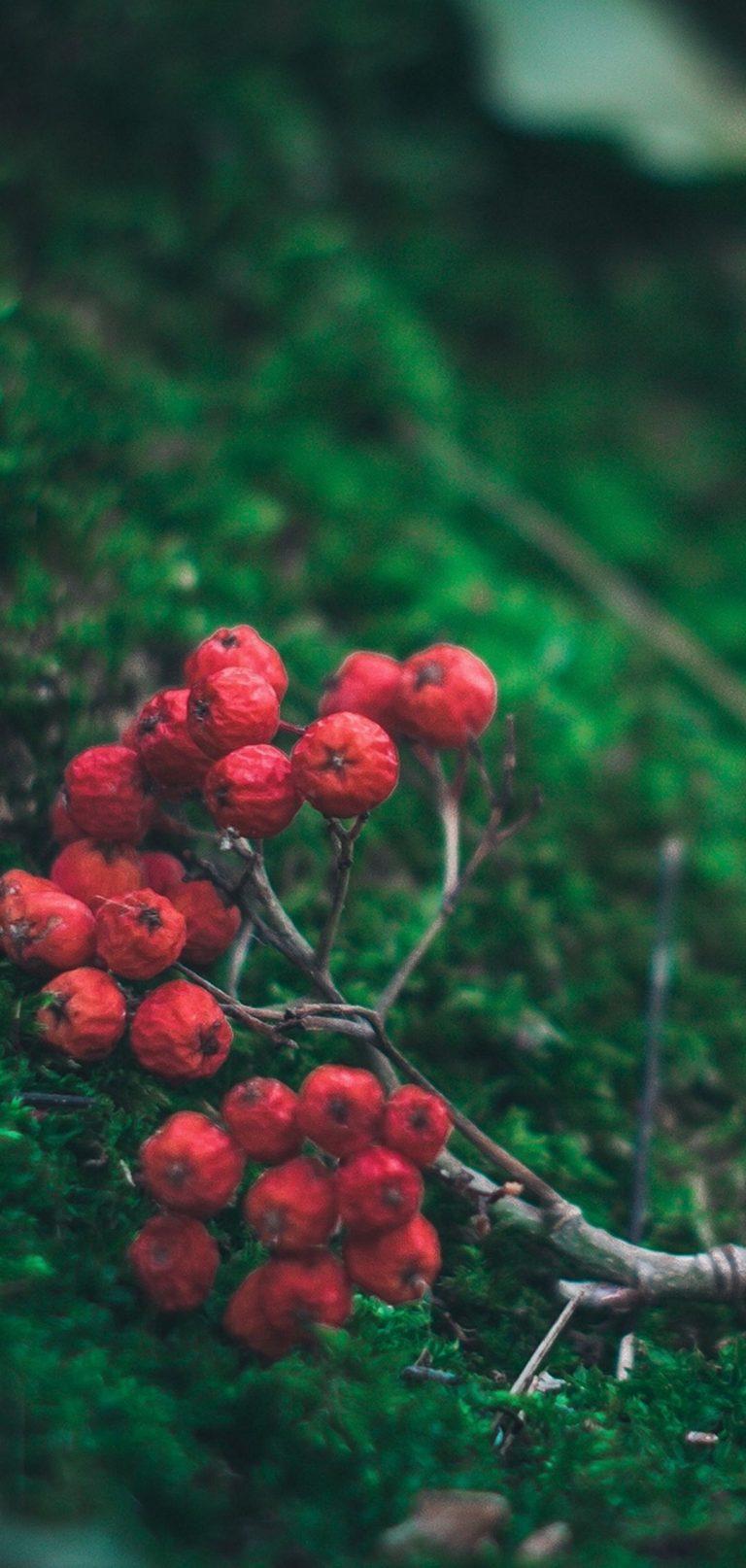 Rowan Branch Berries 1080x2270 768x1614