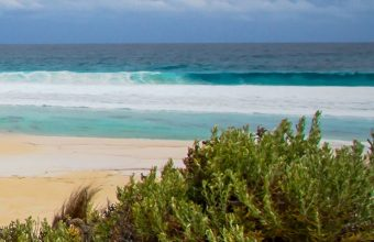 Sea Sand Beach Grass 1080x2270 340x220