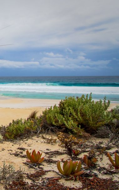 Sea Sand Beach Grass 800x1280 380x608