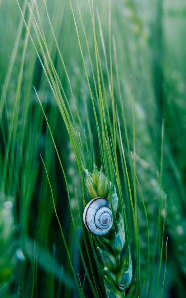 Snail Macro Shell 800x1280 380x608