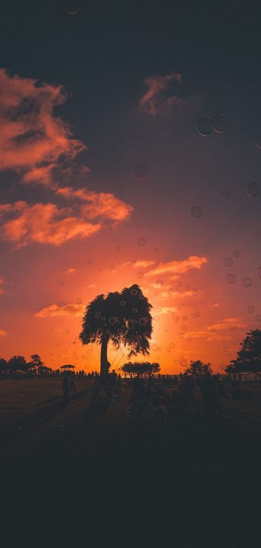 Soap Bubbles Sunset Trees 1080x2270 380x799