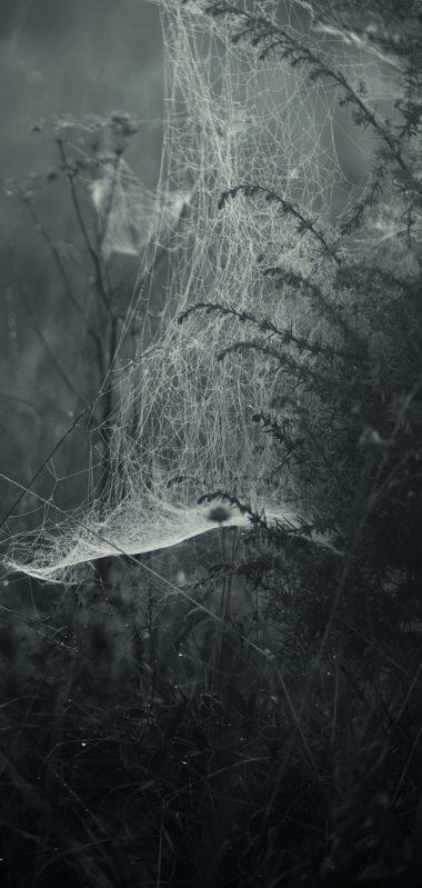 Spiderweb Fog Bw 1080x2270 380x799